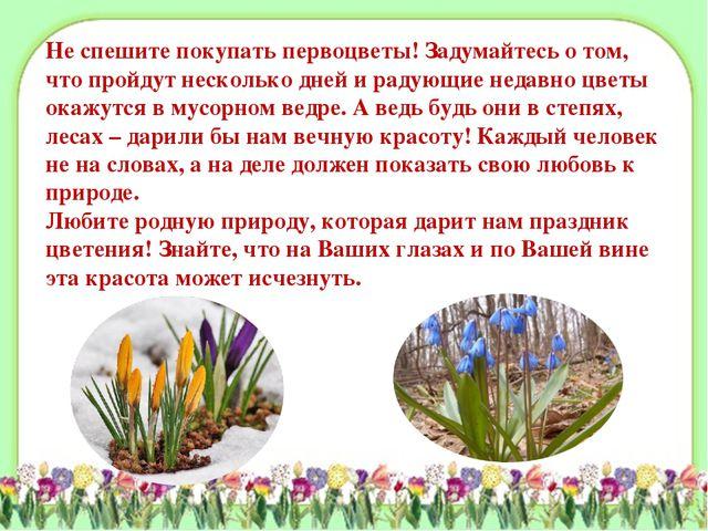Не спешите покупать первоцветы! Задумайтесь о том, что пройдут несколько дней...