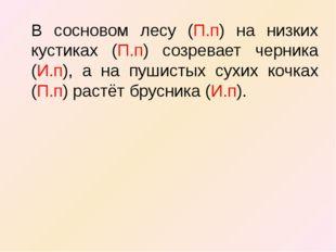 В сосновом лесу (П.п) на низких кустиках (П.п) созревает черника (И.п), а на