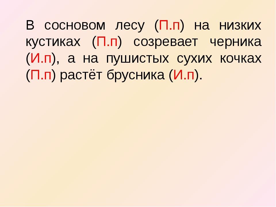 В сосновом лесу (П.п) на низких кустиках (П.п) созревает черника (И.п), а на...