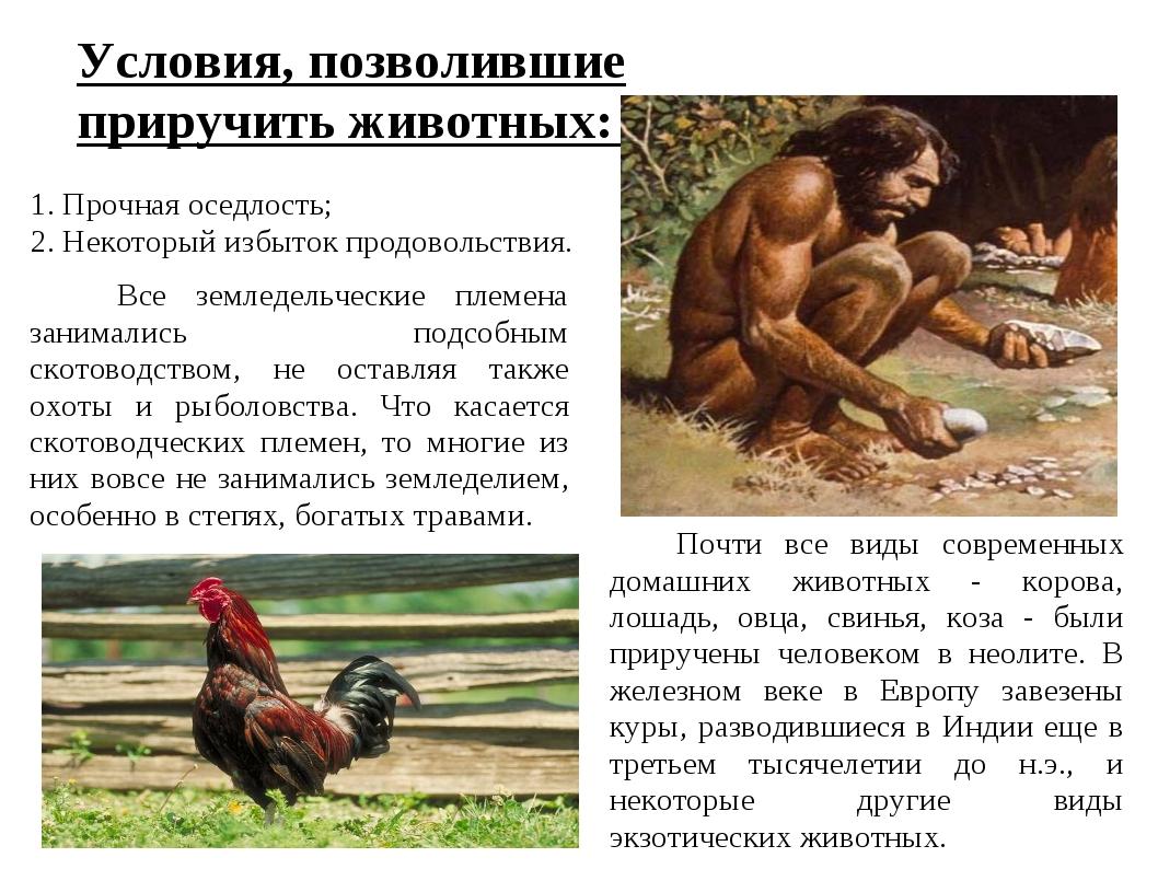 Условия, позволившие приручить животных: 1. Прочная оседлость; 2. Некоторый и...