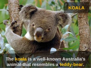 KOALA The koala is a well-known Australia's animal that resembles a teddy-be