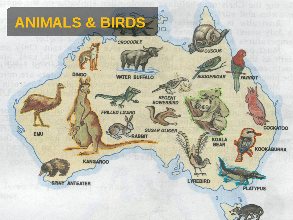 ANIMALS & BIRDS