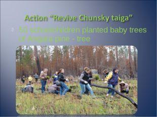 50 schoolchildren planted baby trees of Angara pine - tree