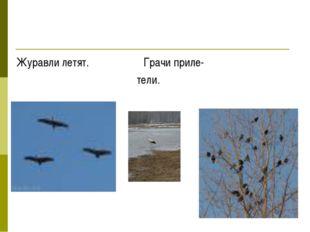 Журавли летят. Грачи приле- тели.