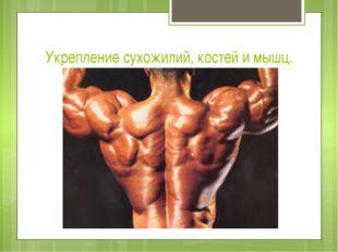 Укрепление сухожилий, костей и мышц.