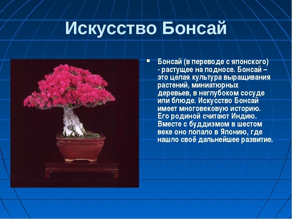 Искусство Бонсай Бонсай (в переводе с японского) - растущее на подносе. Бонса...
