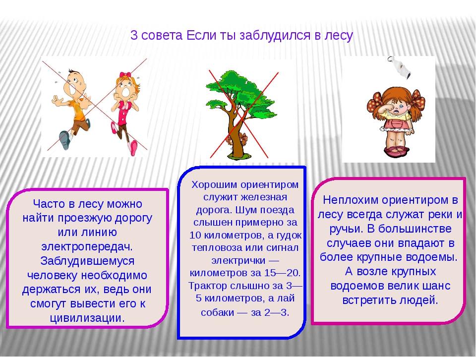 3 совета Если ты заблудился в лесу Неплохим ориентиром в лесу всегда служат...