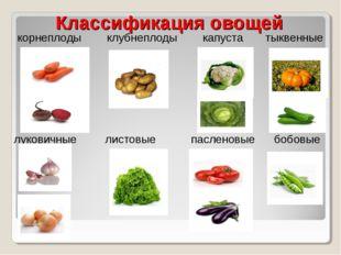 Классификация овощей корнеплоды клубнеплоды капуста тыквенные луковичные лист