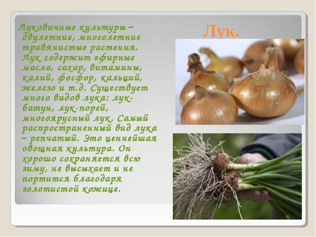 Лук. Луковичные культуры – двулетние, многолетние травянистые растения. Лук с...