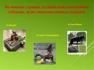 Во многих странах установлены памятники собакам, за их многочисленные подвиги