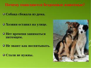 Почему появляются бездомные животные? Собака сбежала из дома. Хозяин оставил