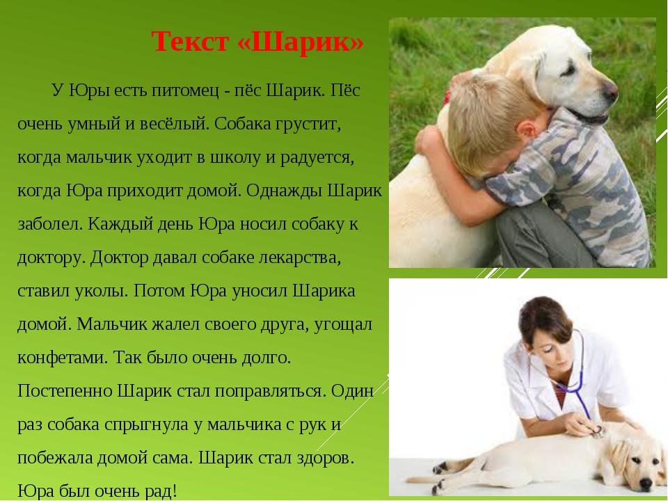 Текст «Шарик» У Юры есть питомец - пёс Шарик. Пёс очень умный и весёлый. Со...