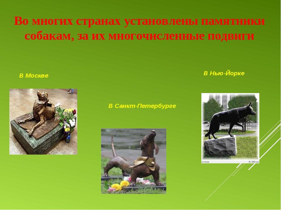 Во многих странах установлены памятники собакам, за их многочисленные подвиги...