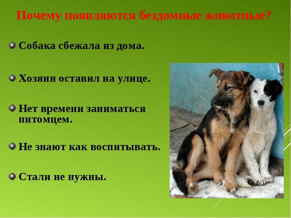 Почему появляются бездомные животные? Собака сбежала из дома. Хозяин оставил...