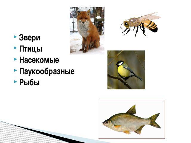 Звери Птицы Насекомые Паукообразные Рыбы