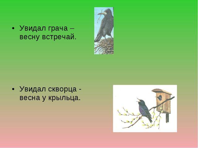 Увидал грача – весну встречай. Увидал скворца - весна у крыльца.