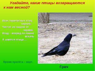 Угадайте, какие птицы возвращаются к нам весной? Всех перелётных птиц черней