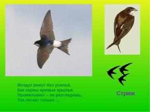 . Воздух режут без усилья, Как серпы кривые крылья. Промелькнет – не разгляди
