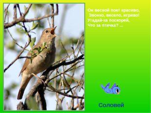 Он весной поет красиво, Звонко, весело, игриво! Угадай-ка поскорей, Что за пт
