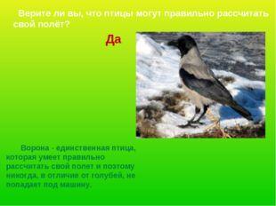 Ворона - единственная птица, которая умеет правильно рассчитать свой полет и