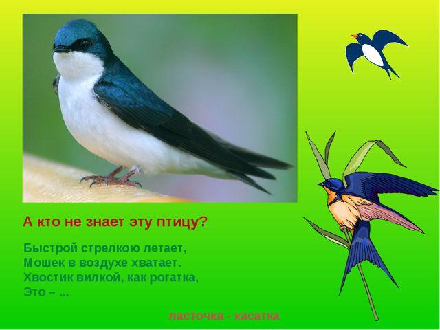 А кто не знает эту птицу? ласточка - касатка Быстрой стрелкою летает, Мошек...
