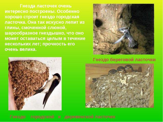 Гнездо береговой ласточки Гнездо городской и деревенской ласточек Гнезда ласт...