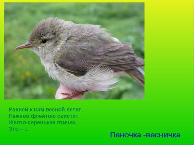 Ранней к нам весной летит, Нежной флейтою свистит Желто-серенькая птичка, Это...