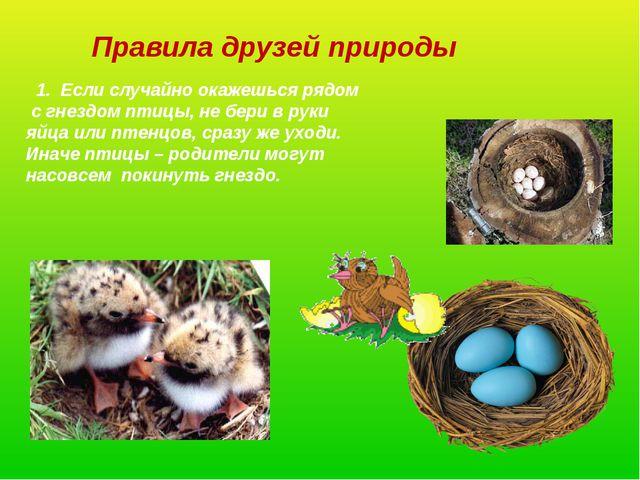Правила друзей природы 1. Если случайно окажешься рядом с гнездом птицы, не б...