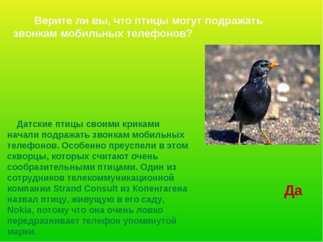 Датские птицы своими криками начали подражать звонкам мобильных телефонов. О...