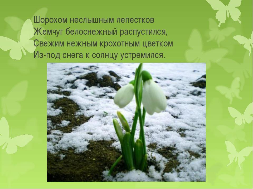 Шорохом неслышным лепестков Жемчуг белоснежный распустился, Свежим нежным кр...