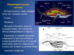 Пищеварительная система Ротовая полость: язык, мощные зубы, нет слюнных желез