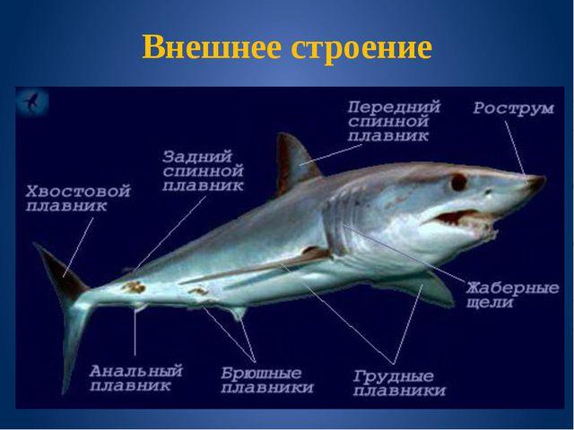 Хрящевые рыбы учебный ролик по биологии для 7 класса скачать видио