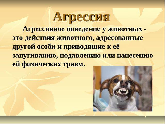Агрессия Агрессивное поведение у животных - это действия животного, адресов...