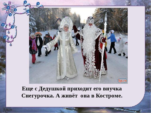 Еще с Дедушкой приходит его внучка Снегурочка. А живёт она в Костроме.