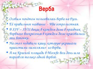 Верба Особым почётом пользовалась верба на Руси. Её правильное название - Ива