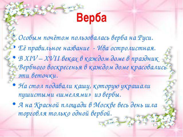 Верба Особым почётом пользовалась верба на Руси. Её правильное название - Ива...