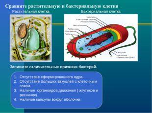 Сравните растительную и бактериальную клетки Растительная клетка Бактериальна