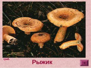 3.Шляпка 3-10 см в диаметре, плосковыпуклая, позднее широко-воронковидная, с