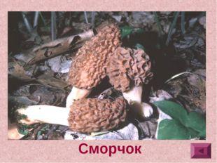 4.Шляпка яйцевидная, эллипсоидальная или коническая, с сетью продольных и по