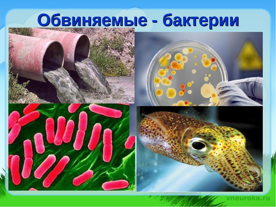 Обвиняемые - бактерии