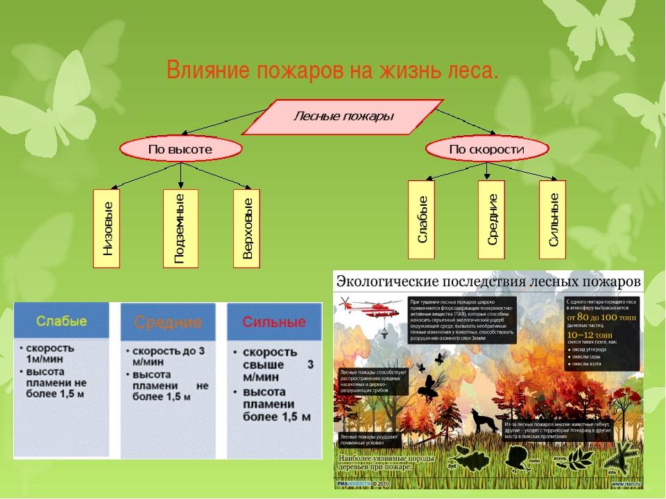 Влияние пожаров на жизнь леса.