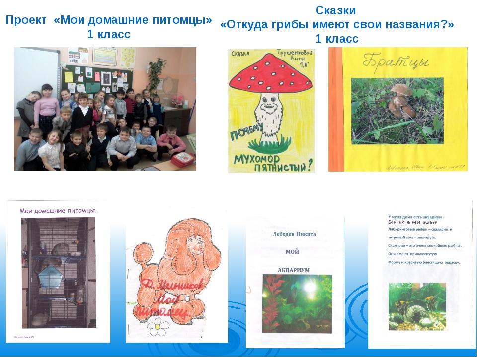Проект «Мои домашние питомцы» 1 класс Сказки «Откуда грибы имеют свои названи...