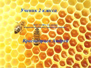 Ученик 2 класса МОУ «СОШ п. Тепличный Саратовской области Саратовского района