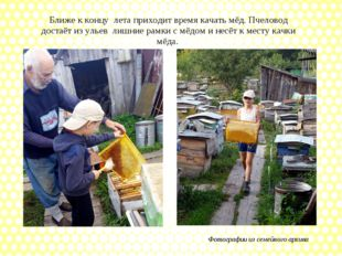Ближе к концу лета приходит время качать мёд. Пчеловод достаёт из ульев лишни