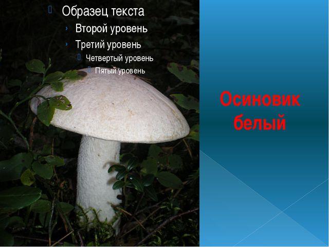 Осиновик белый