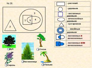 1 2 3 4 5 хвойных лиственных И вечнозеленых лиственных ИЛИ вечнозеленых № 28.