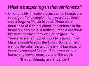 What's happening in the rainforests? Unfortunately in many places the rainfor