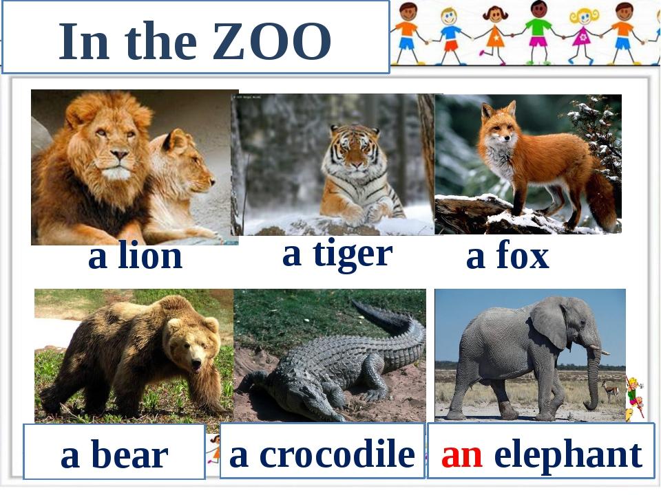 In the ZOO a lion a tiger a fox a bear a crocodile an elephant