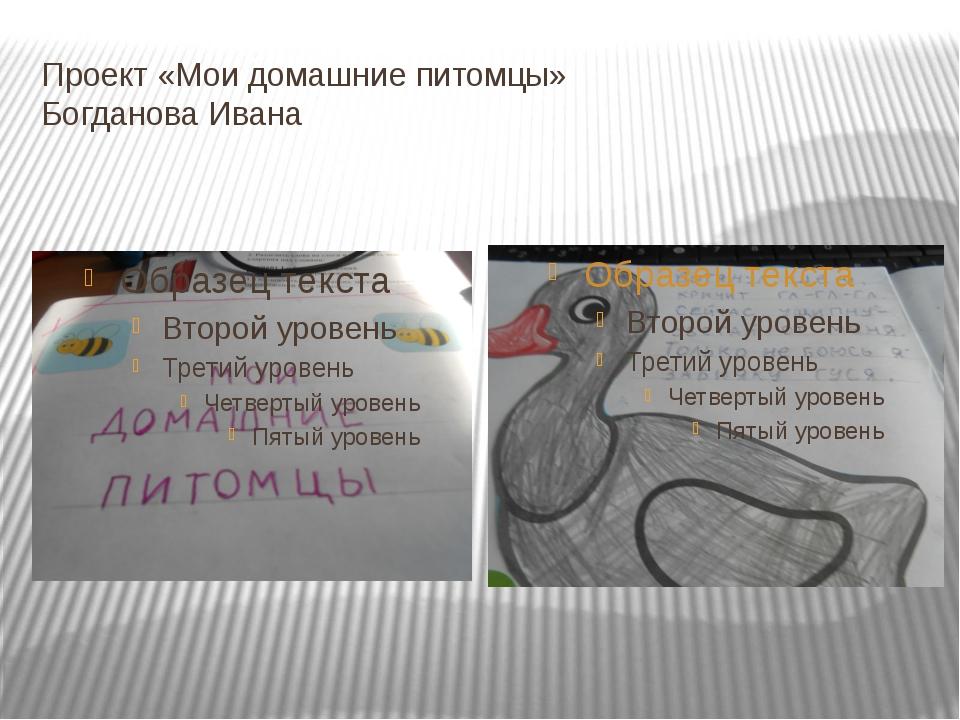 Проект «Мои домашние питомцы» Богданова Ивана