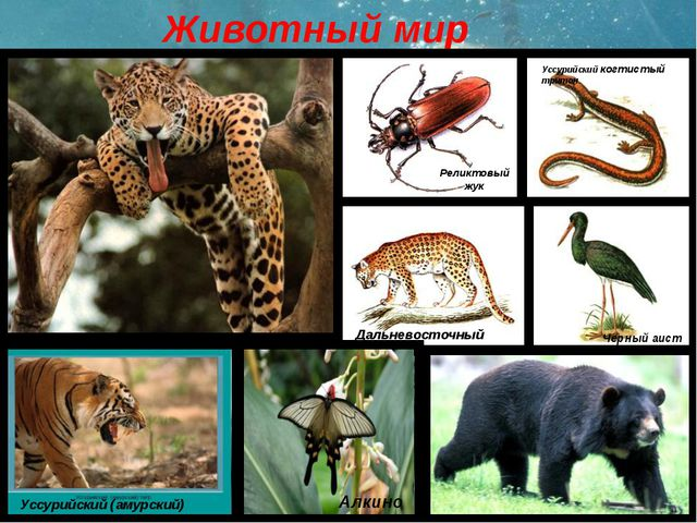 Реферат 4 класс природа приморского края